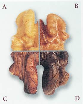 walnut-colors.jpg